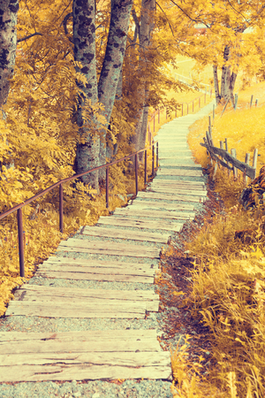 scenic spots: Pathway through the autumn forest
