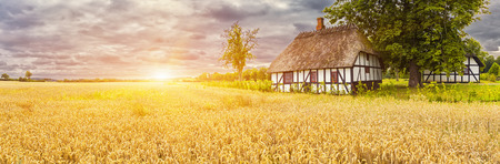 wheatfield: Typical Danish Picturesque old houses and wheatfield at Sunrise  Sunset in Kvaerndrup, Denmark
