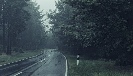 Road Through A Forest With Mourning Fog. Color Toning