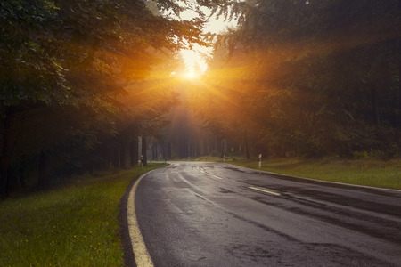 Road Through A Forest At Beautiful Sunrise With Mourning Fog