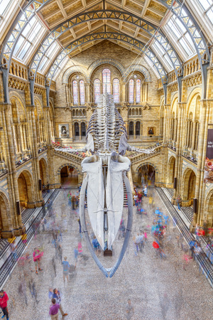 LONDON, ENGLAND - SEP 2018: Tourists visit new Hintze hall In Natural History Museum. One of the most visited attractions in London