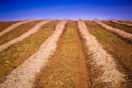 farm field: Crops Grow on Fertile Farm Field Stock Photo