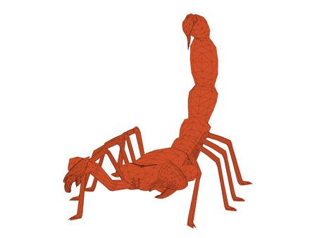 arthropoda: Vector illustration of polygonal scorpion. Isolated.
