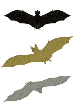 sides: Vector illustration of a bat from different sides. Polygon. Isolated.