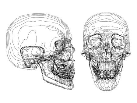 Vector illustration of abstract skull consisting of strips. Stock Illustratie