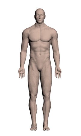 anatomy nude: Vector illustration of a realistic man. Polygon. 3D.