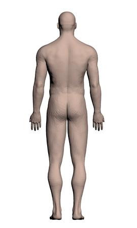 uomo nudo: Illustrazione vettoriale di un uomo realista. Poligono. 3D.