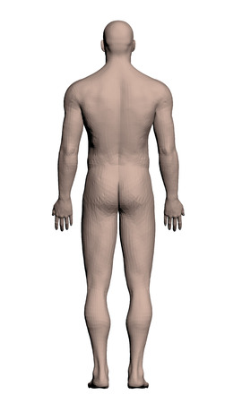 naked male: Vector illustration of a realistic man. Polygon. 3D.