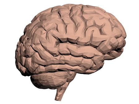 brain illustration: Vector illustration of a brain. Polygon. Isolated.