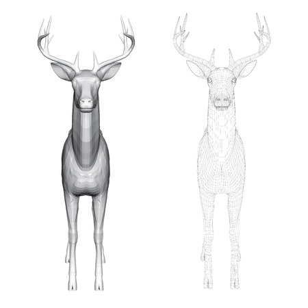 Vector illustration of roe deer, front view. Two deer with polygonal and reticulated 3D.