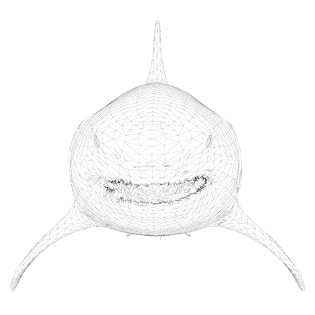Polygonal 3D shark. Dangerous shark isolated on white background. The shark is covered with a polygonal mesh. Front view. Vector illustration.