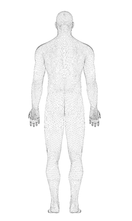 A model of a man in 3D. The polygonal man stands in a pose with his hands down. The structure of man. Vector illustration. Back view.