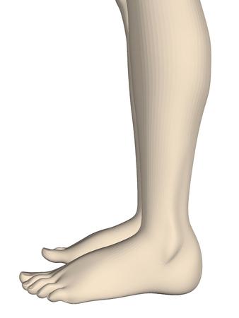 Slender legs of the girl. Realistic legs of the girl 3D. Side view. Vector illustration. Illustration