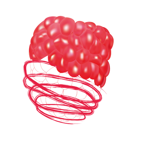Raspberry with juice. Detail raspberry half pressed into juice. Vector illustration. Ilustrace