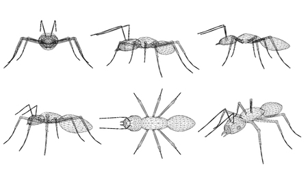 Set with ants wireframes in different positions. Isometric, side view, top view, front view. 3D. Vector illustration.