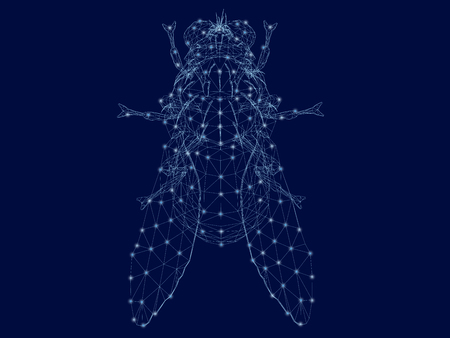 Polygonal fly top view. Wireframe of a detailed fly made of blue lines and glowing lights. A fly on a dark background. 3D. Vector illustration. Ilustracja