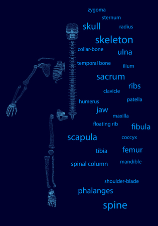 Background with wireframe half of a human skeleton, divided into bones. The words of the names of bones. 3D. Vector illustration.