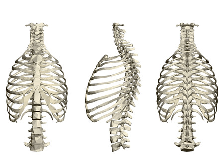 Set with human ribcage and spine. 3D. Front, side and rear view. Vector illustration.