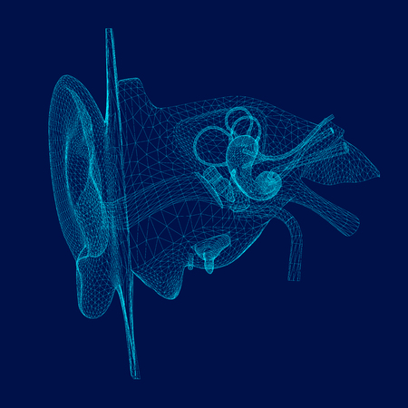 Wireframe of the internal structure of the human ear. 3D. Front view. Vector illustration Ilustração