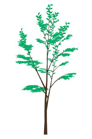 Tree with green leaves. Isolated on white background. Vector illustration