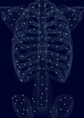 Human thorax. Polygonal wireframe of a human skeleton made of blue lines on a dark background. Vector illustration.