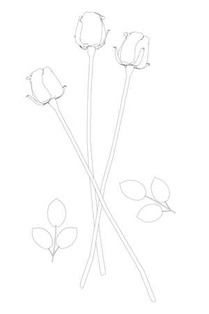 Contour of a bouquet of three roses from black lines isolated on a white background. Vector illustration
