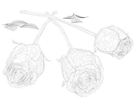 Wireframe of a bouquet of three roses from black lines isolated on white background. 3D. Vector illustration