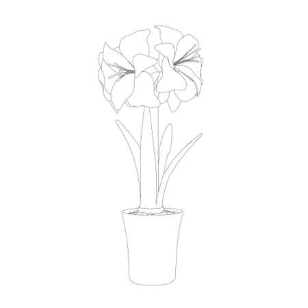 Contour of Hippeastrum in a pot made of black lines isolated on white background. Side view. Vector illustration