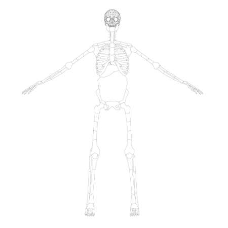The contour of the human skeleton with raised hands. Front view. Vector illustration Ilustração