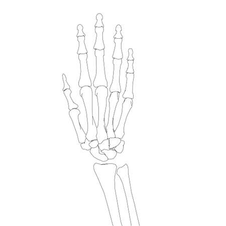 Human hand skeleton contour isolated on white background. Vector illustration