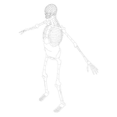 The contour of the human skeleton with raised hands. isometric view. Vector illustration Ilustração
