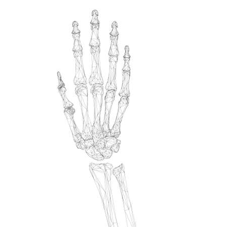 Wire-frame skeleton of human hand isolated on white background. 3D. Vector illustration
