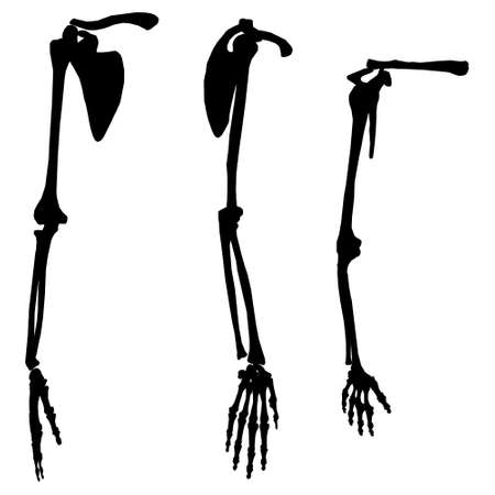 Set with silhouettes of human skeleton hands in different positions isolated on white background. Vector illustration