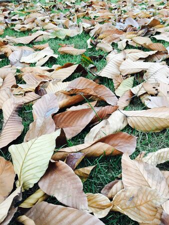dry leaf: The dry leaf are look like falling life to reborn with new life.