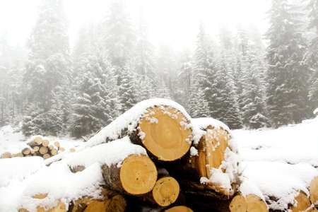 wood snow landscape; industry background