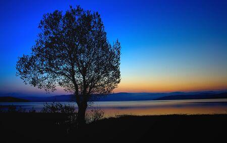 siluet: sunshine bulgarian morning with tree
