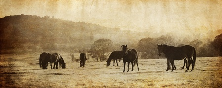 vintage panorma with flock black horse