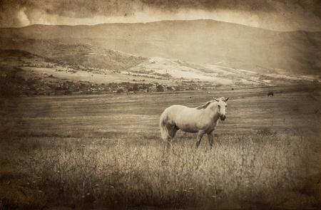 Archiwalne zdjęcie z białym koniu
