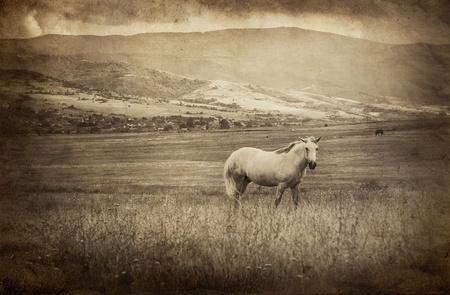 vintage picture with white horse