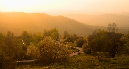 fall mist landscape with road and tree in bulgarian mountain Vitosha photo