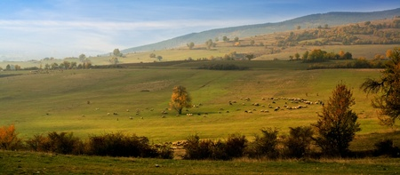 bulgaran farland with sheep in fall time of the year
