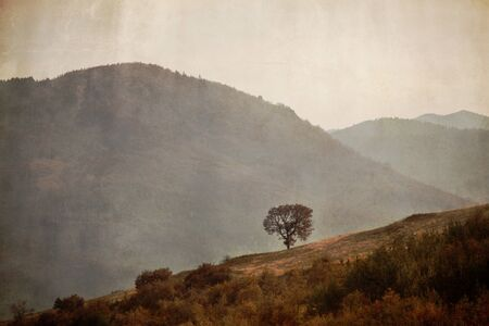old oak tree in vintage background; old textured landscape