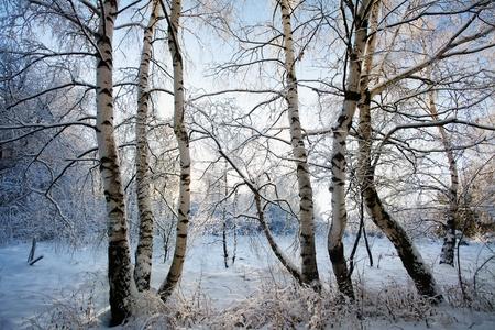 winter wallpaper: fr�a ma�ana de invierno en bosque hermoso, papel pintado invierno o foto de postal Foto de archivo