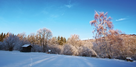 winter park in dusk time; beautiful nature landscape for wallpaper or background Stock Photo - 11770707