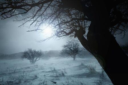 tree silhouette duotone winter landscape- blue toned