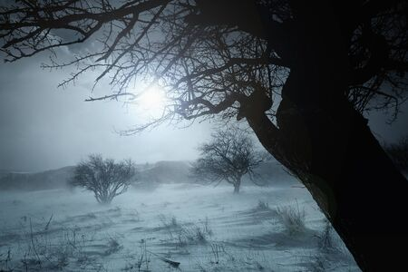 tree silhouette duotone winter landscape- blue toned Stock Photo - 12185819