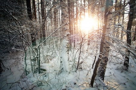 Winter deciduous forest with sunbeams over the trees photo