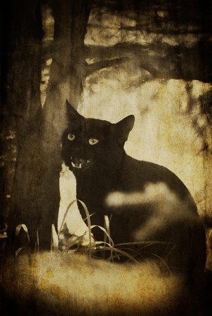 rudy: vintage black skary cat textured background