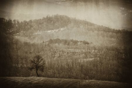vintage old picture with alone tree  photo