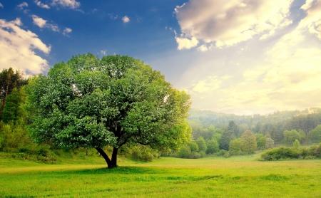 wspaniały piękny krajobraz z jednego drzewa; hdr zachód słońca nad jednym drzewie spokojnej Zdjęcie Seryjne